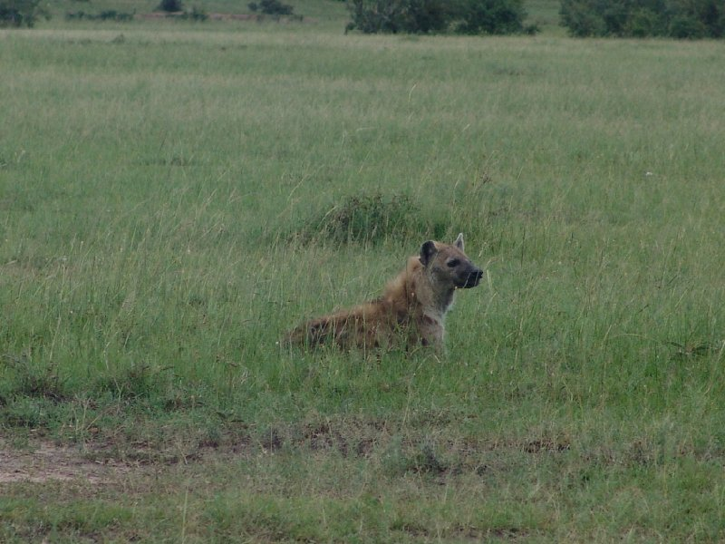 Great Masai Mara Camp Stay Kenya Experience