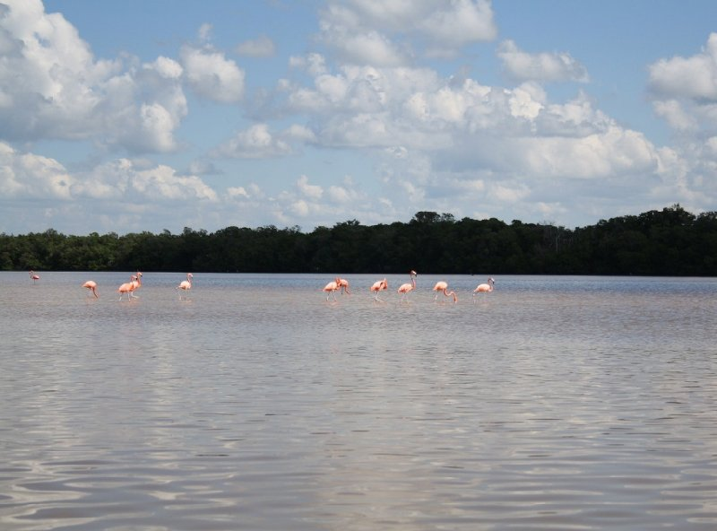 Flamingo Tour in Yucatan Mexico Celestun Trip Picture