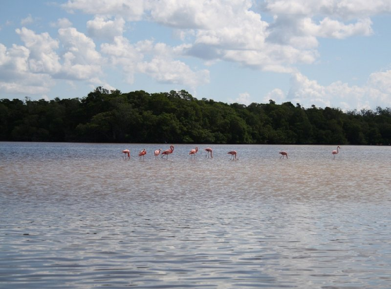 Flamingo Tour in Yucatan Mexico Celestun Trip Adventure