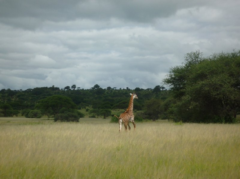 Tanzania Wildlife Safari Tarangire National Park Information