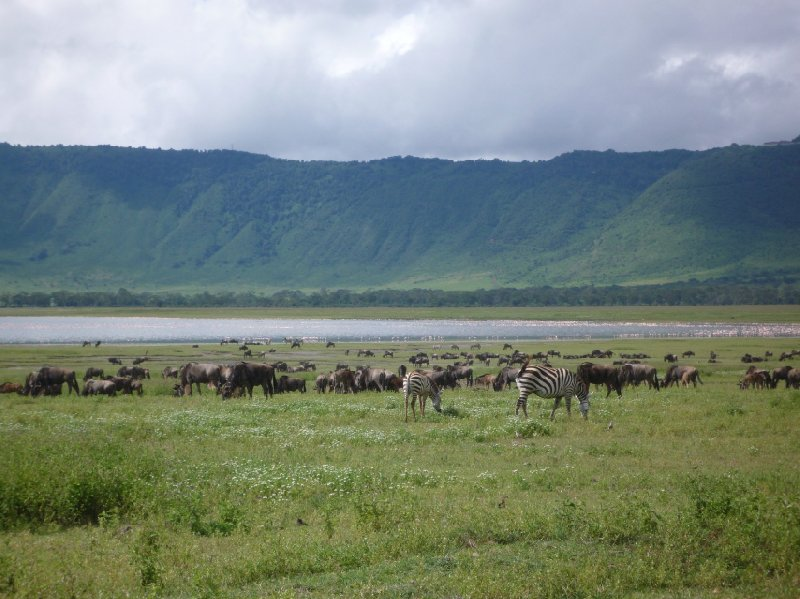Tanzania Wildlife Safari Tarangire National Park Travel Experience