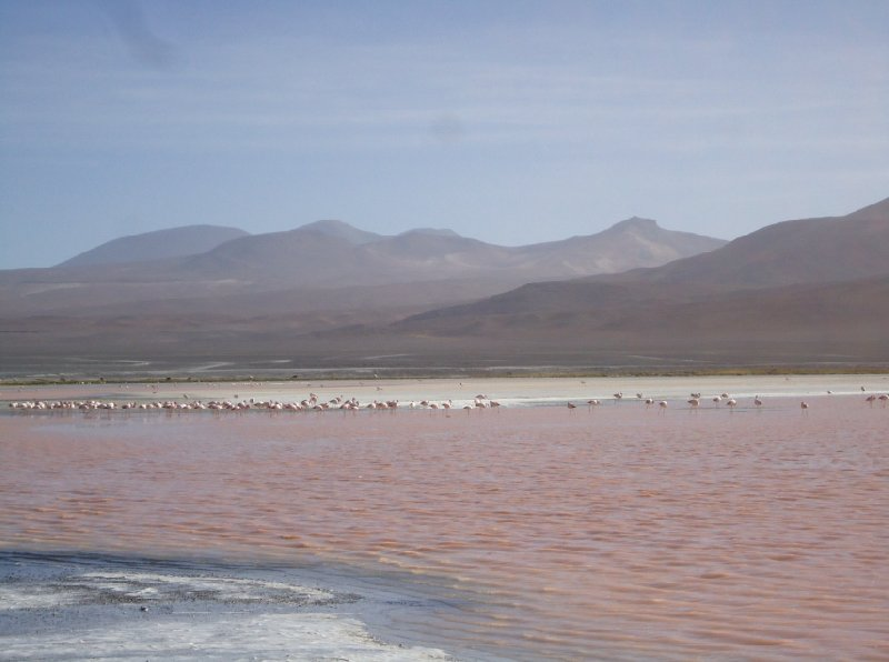 Photo Bus tour from Chile to Bolivia Bolivia