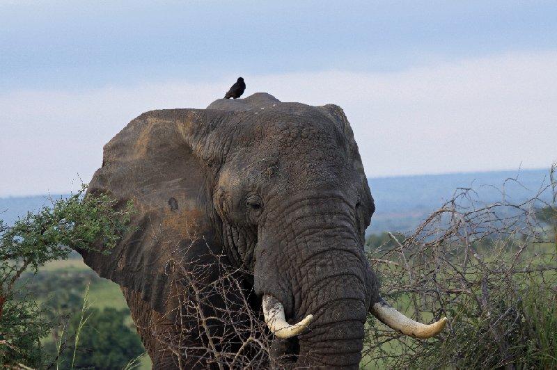 Photo Uganda Safari Murchison Falls NP holiday