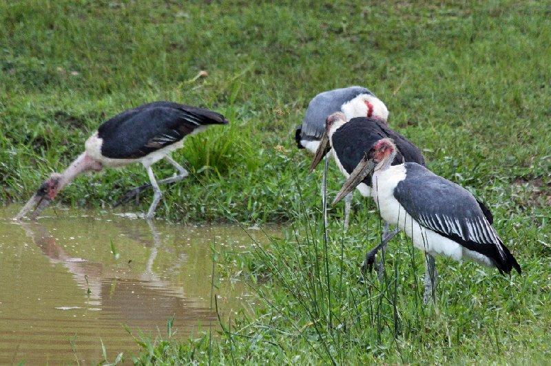 Photo Uganda Safari Murchison Falls NP travel