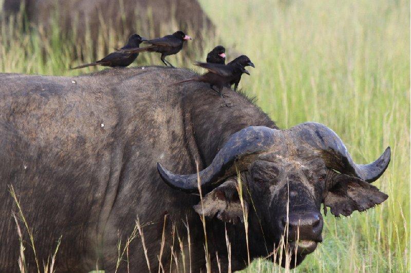Photo Uganda Safari Murchison Falls NP experience