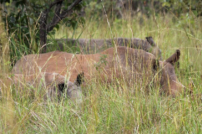 Photo Uganda Safari Murchison Falls NP friendly