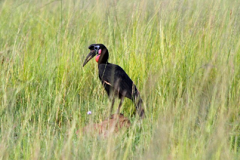 Photo Uganda Safari Murchison Falls NP family