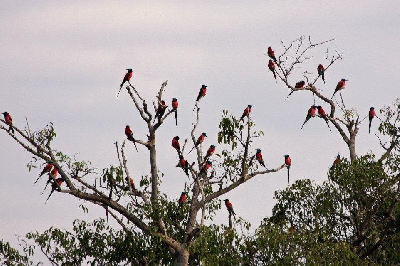 Uganda Safari Murchison Falls NP Lolim Diary