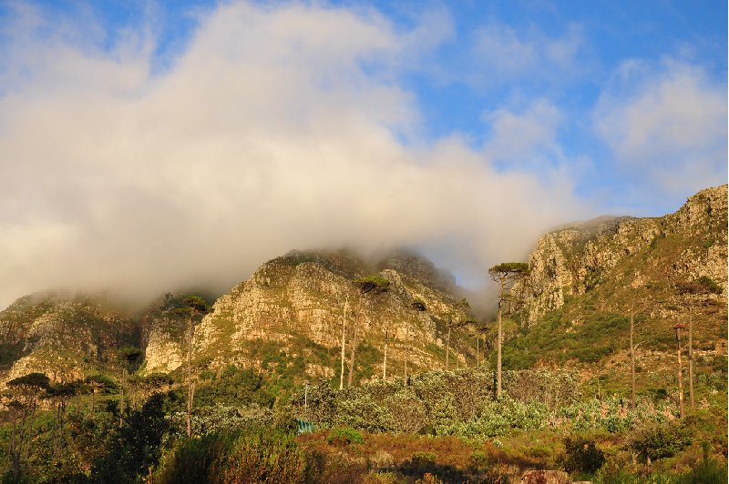 Cape Town South Africa Holiday Experience