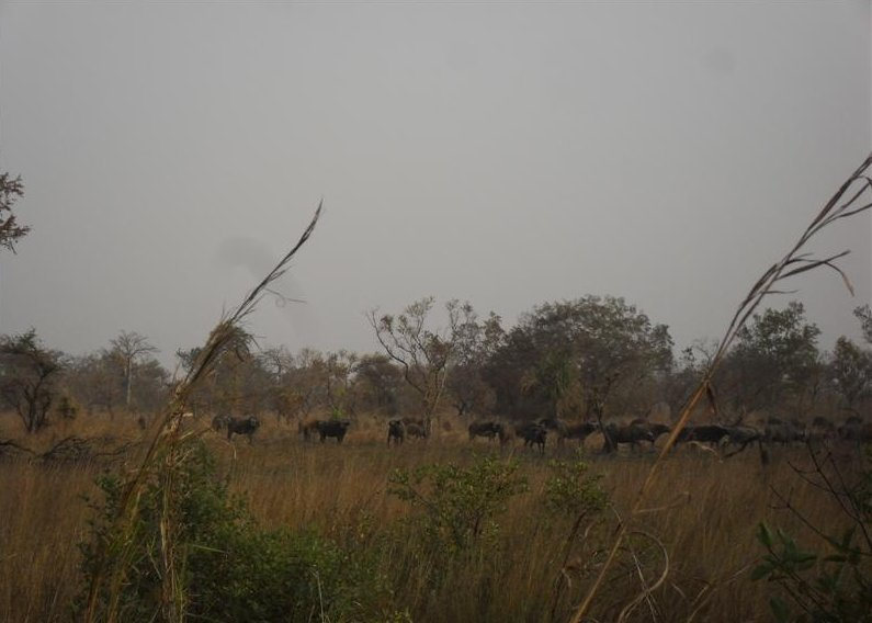 Benin Wildlife Safari Tour Tanguieta Vacation Sharing
