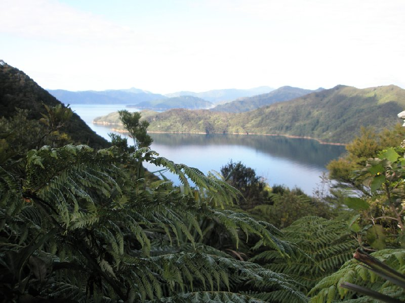 Photo Queen Charlotte Track New Zealand located