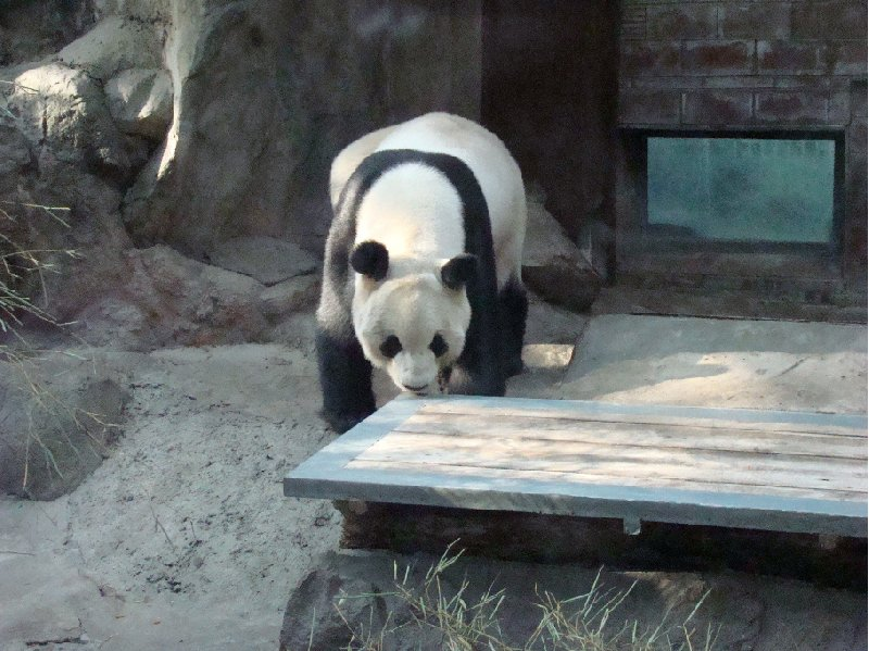 Photo Day Trip to the Zoo in Beijing native