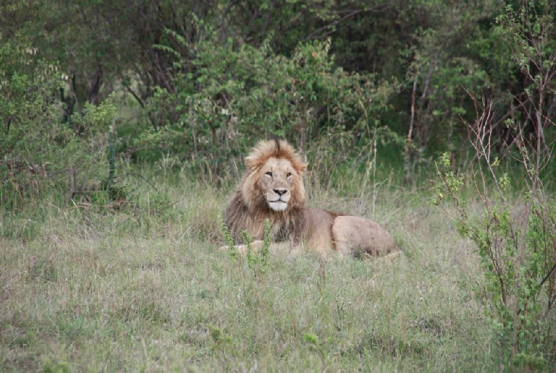 Kenya Tours and Safaris Tsavo Travel Sharing