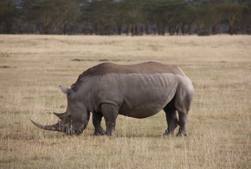 Kenya Tours and Safaris Tsavo Picture