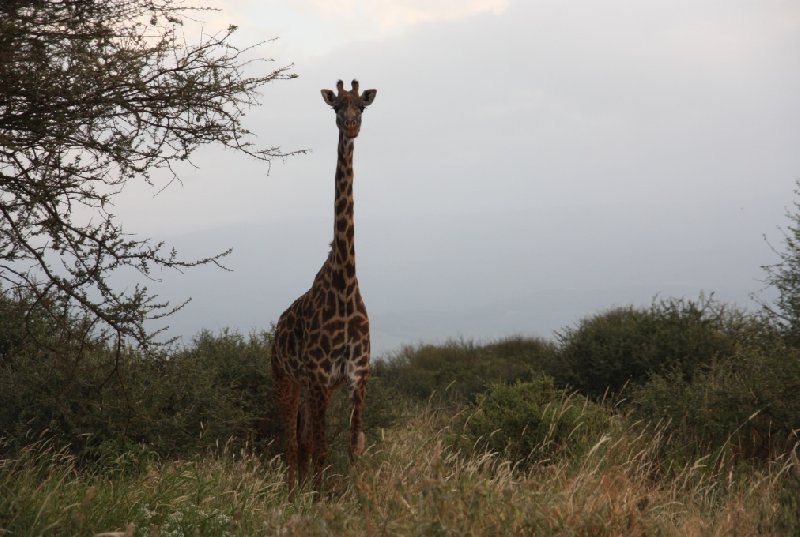 Kenya Tours and Safaris Tsavo Trip Adventure