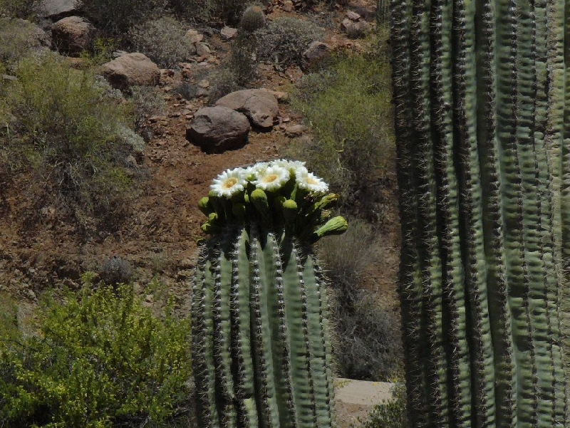Photo Vacation in Phoenix Arizona