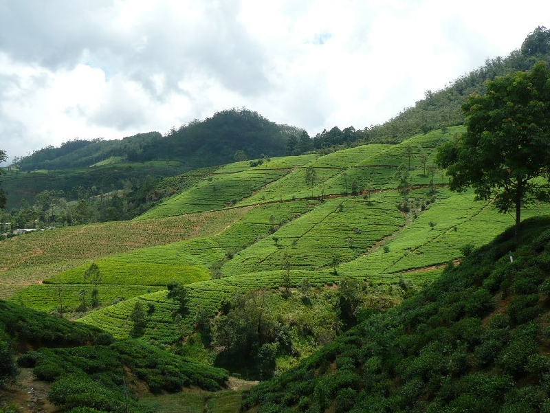 Nuwara Eliya Sri Lanka Stay Information
