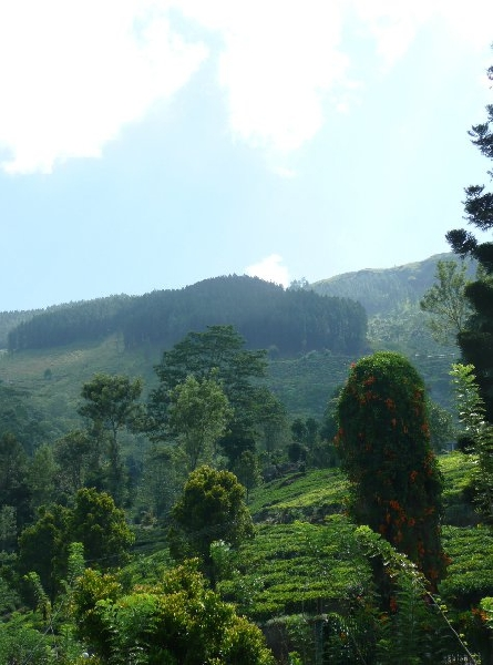 Nuwara Eliya Sri Lanka Stay Picture Sharing