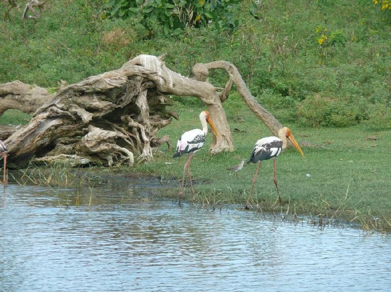 Hambantota Sri Lanka Trip Experience