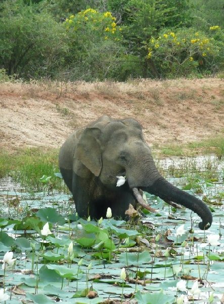 Hambantota Sri Lanka Picture Sharing