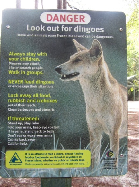 Fraser Island Tour Australia Album Pictures