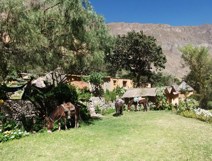 Adventure Travel Colca Canyon Peru Holiday Photos