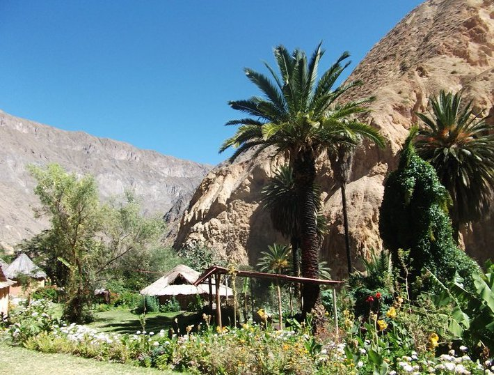 Colca Canyon Peru Vacation Picture