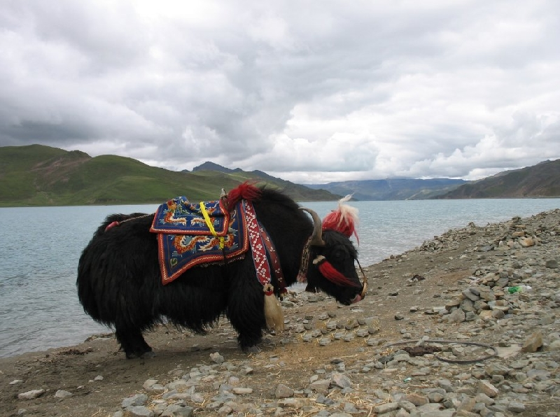 Journey to Tibet China Trip Review