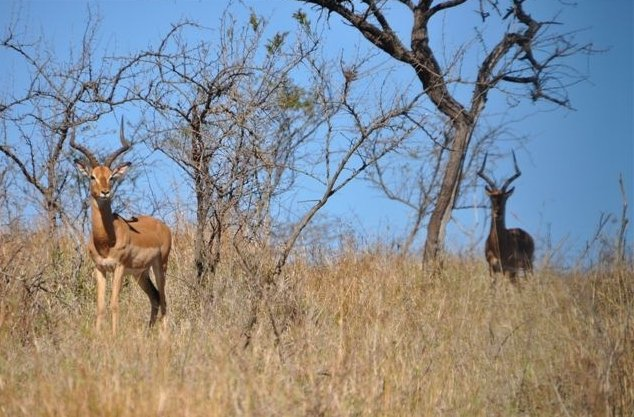 KwaZulu-Natal South Africa Safari Diary Photography