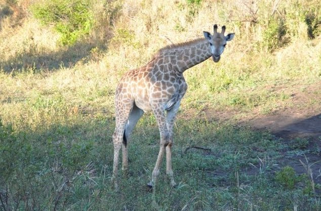 KwaZulu-Natal South Africa Safari Vacation Diary