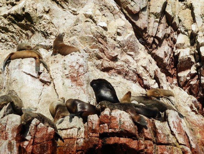 Paracas Peru Photographs