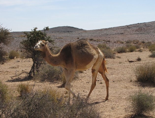Photo Dakhla Western Sahara Desert Tour