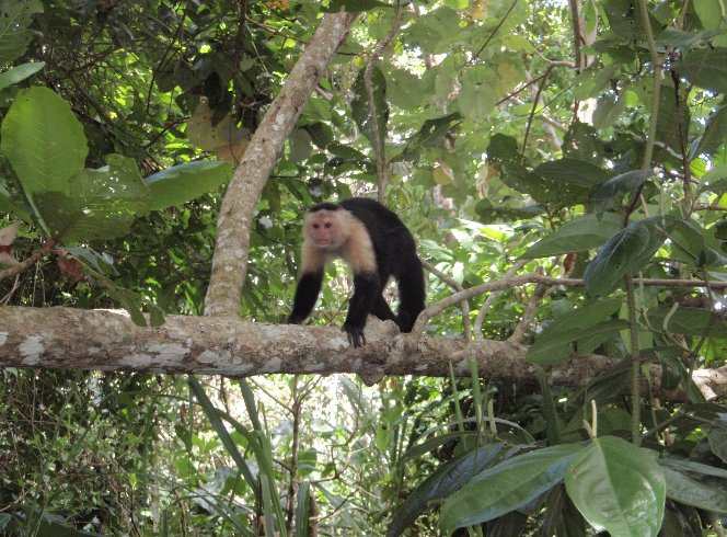 Cahuita Costa Rica Holiday Adventure