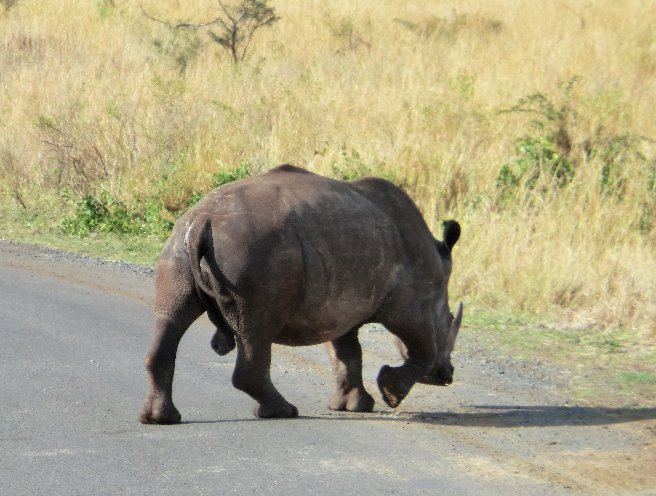 Kruger National Park South Africa Diary Photo