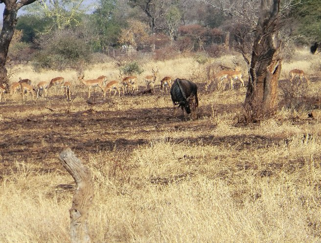 Kruger National Park South Africa Review Photo