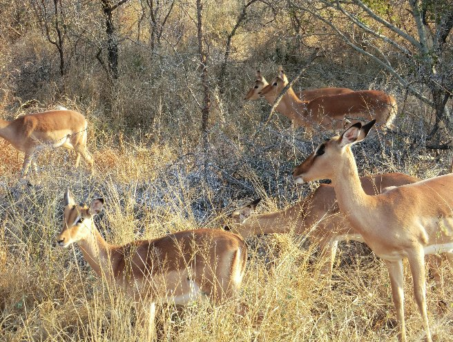 Kruger National Park South Africa Information