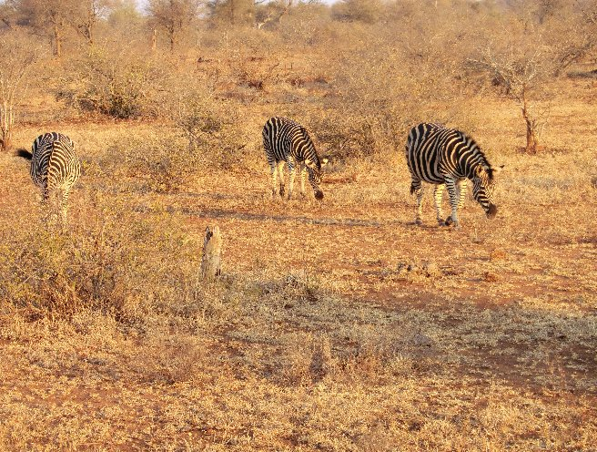 Kruger National Park South Africa Blog Adventure