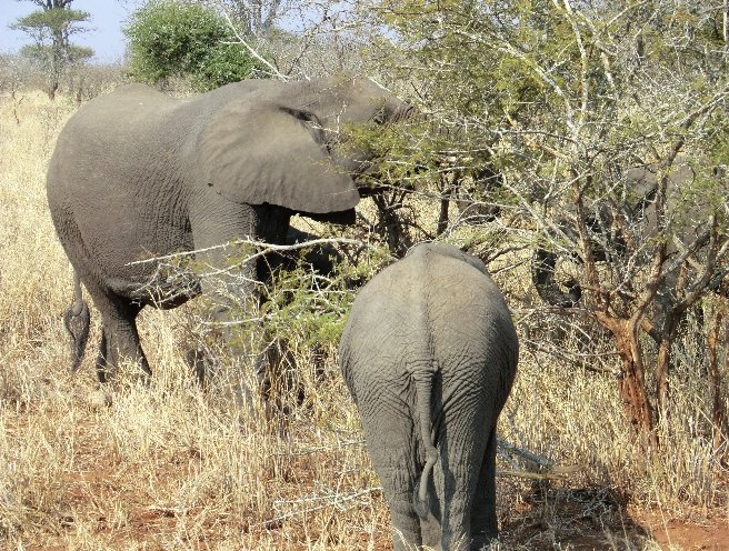 Kruger National Park South Africa Travel Adventure