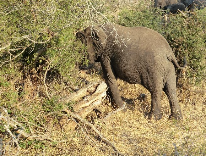 Kruger National Park South Africa Travel Information