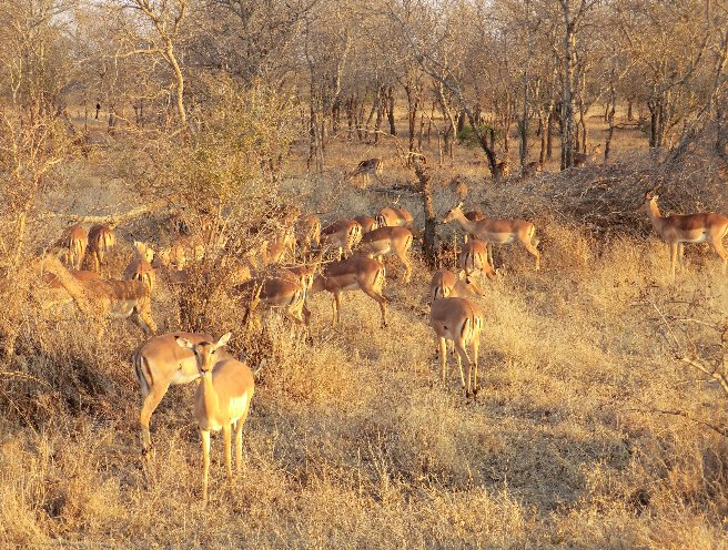 Kruger National Park South Africa Adventure