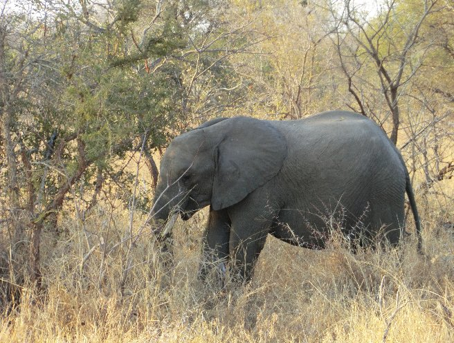 Kruger National Park South Africa Diary Adventure