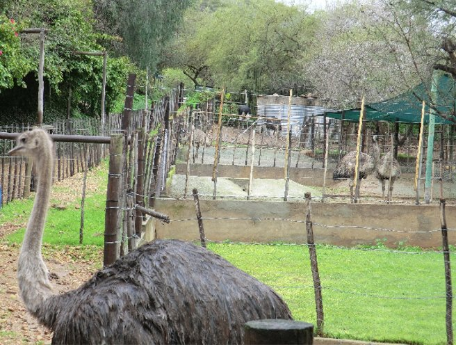 Oudtshoorn South Africa Blog Review