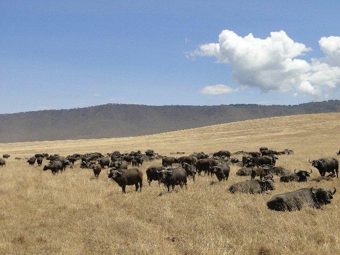 Arusha Tanzania Blog Adventure