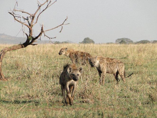 Arusha Tanzania Vacation Adventure