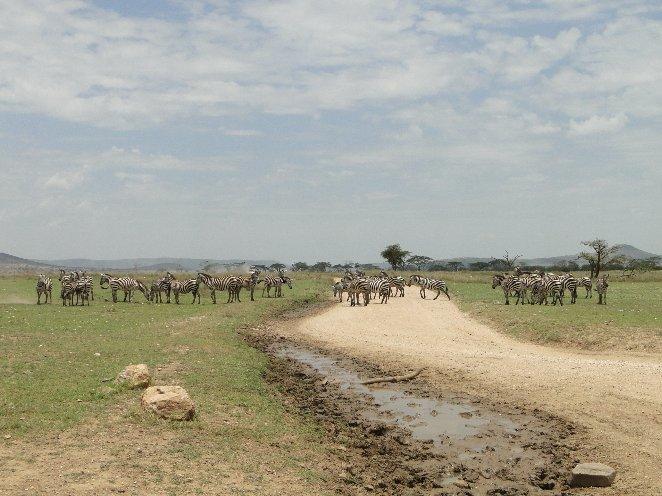 Arusha Tanzania Travel Information