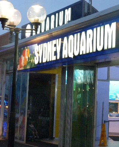 Aquarium Sydney Darling Harbour Australia Travel Photo