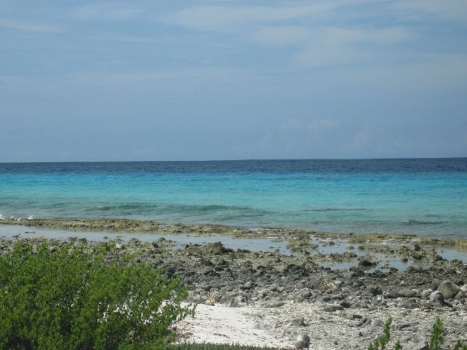 Bonaire Island Netherlands Antilles Review Photograph