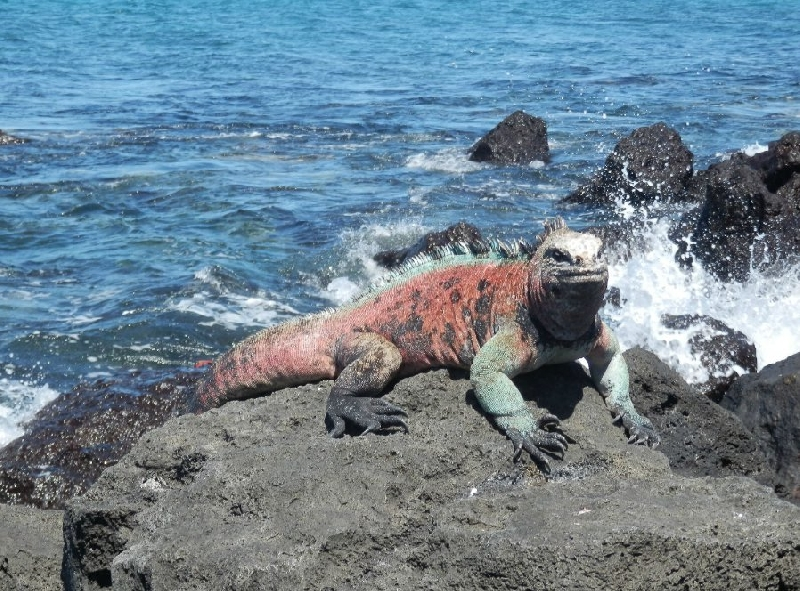Galapagos Ecuador Holiday Review