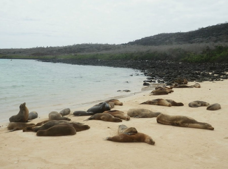 Galapagos Islands Ecuador Diary Pictures