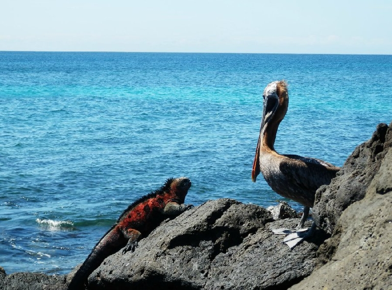 Galapagos Islands Ecuador Travel Picture
